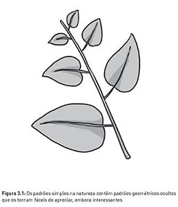 Figura 3.1 – Padrões na natureza